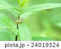 緑の中の生き物たち 24019324