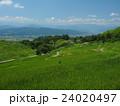 緑の棚田と里山の風景 24020497