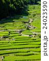四谷千枚田 (20) 24023590