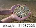 サンゴ 砂浜 海 夏 浜辺 珊瑚 沖縄 24037223