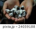 パンダマウス 24039188