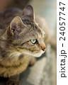 ノラ猫 24057747