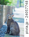 ノラ猫 24057748