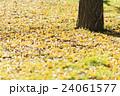 秋の公園 イチョウの落ち葉 24061577