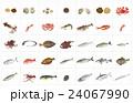 海産物 海産 海の幸のイラスト 24067990