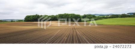 畑 24072272