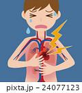 ベクター 動脈 大動脈のイラスト 24077123