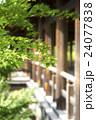 東福寺の青もみじ 24077838