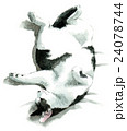 あおむけに寝る白黒ブチ猫 24078744