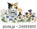 パンジーと三毛猫 24093805