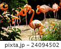上野動物園 24094502