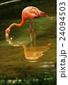 上野動物園 24094503