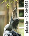 上野動物園 ハシビロコウ 24094562