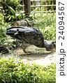 上野動物園 ハシビロコウ 24094567