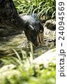 上野動物園 ハシビロコウ 24094569