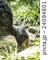 上野動物園 ハシビロコウ 24094601