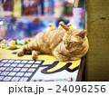 士林夜市で眠る猫 24096256