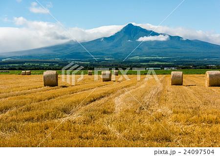 斜里岳と麦畑 24097504