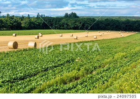 オホーツクの収穫① 24097505