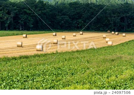 オホーツクの収穫② 24097506