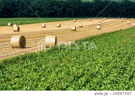 オホーツクの収穫③ 24097507