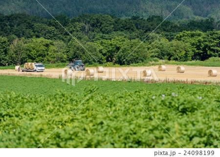 オホーツクの収穫④ 24098199