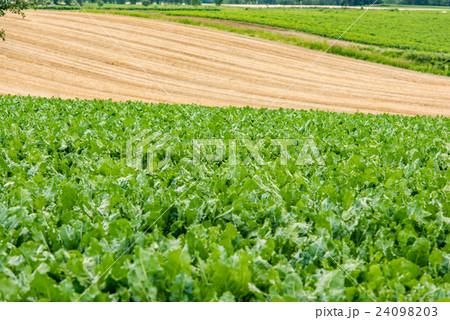 オホーツクの収穫⑧ 24098203