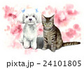 猫 犬 マルチーズのイラスト 24101805