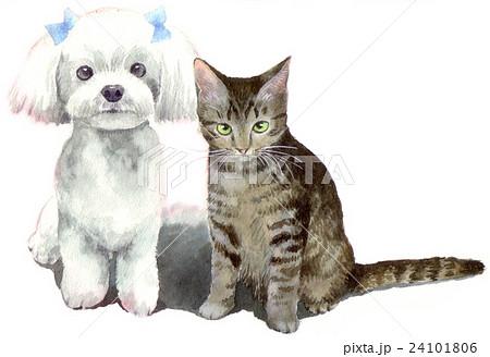 猫とマルチーズ白背景 24101806
