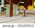 犬 24103012
