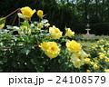蜻蛉池公園のバラ 24108579
