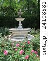 蜻蛉池公園のバラ 24108581