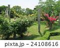 蜻蛉池公園のバラ 24108616