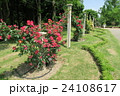 蜻蛉池公園のバラ 24108617
