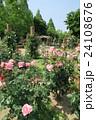 蜻蛉池公園のバラ 24108676
