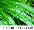 雨上りの葉 24113356
