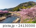 Sakura tree 24130300