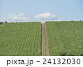 美瑛の大豆畑 24132030