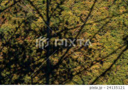 木のシルエットと紅葉した森