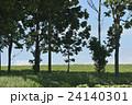 北海道の並木 24140301