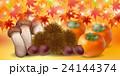 紅葉 秋 食べ物 背景  24144374