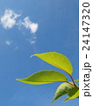 エコイメージ新緑と青空 24147320