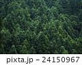 森の木々 24150967