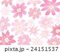 秋桜 24151537