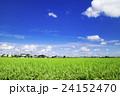 茨城県下妻市から見た夏の風景 24152470