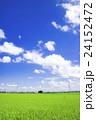 茨城県下妻市から見た夏の風景 24152472