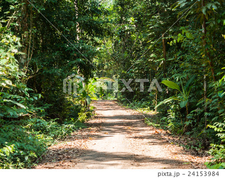 Walking trail in forest at Koh Kood 24153984