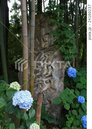 竹林と紫陽花 24160237