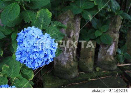 石仏と、ひっそり咲く紫陽花 24160238
