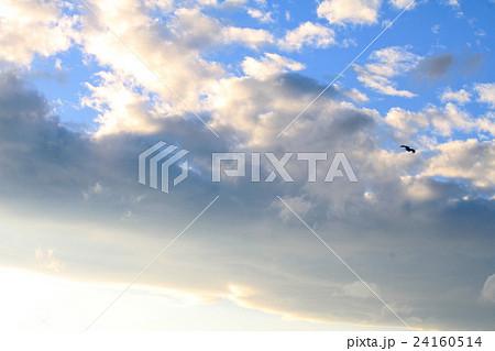 青空、雲と鳥 24160514